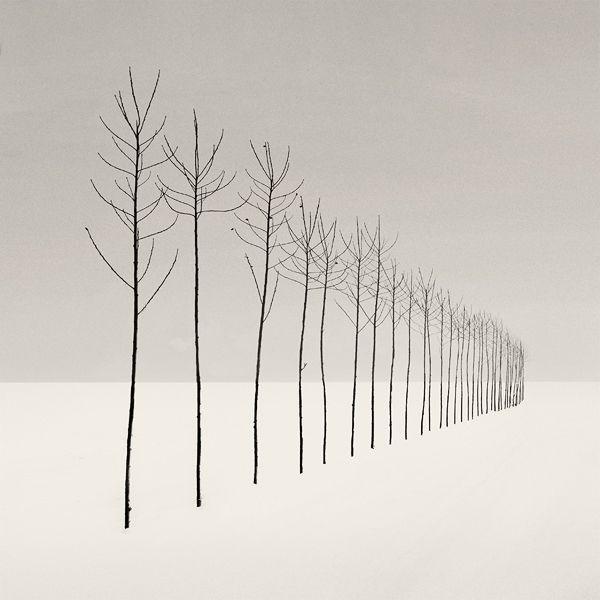s l e n d e r s, photography by Nilgun Kara. Adapazari / Turkey. canon 5D. In Nature, Vegetal, Tree, forest. s l e n d e r s, photography by Nilgun Kara. Image #49664