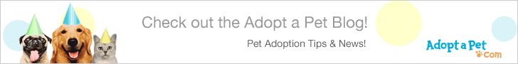Fayetteville, North Carolina - Pet Adoption. Fayetteville Animal Protection Society has dogs, puppies, cats, and kittens to adopt.