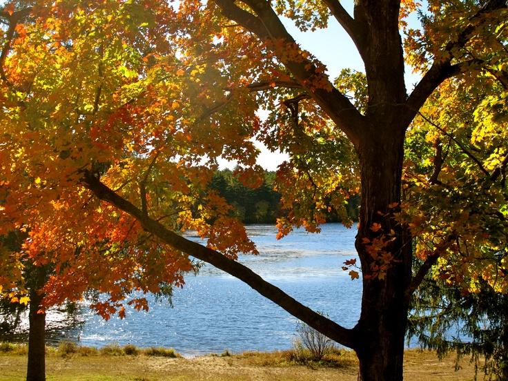 Fall in RI