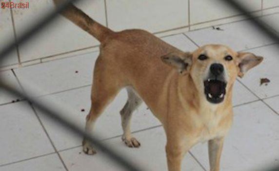 Projeto de construção do abrigo de animais em Viçosa é entregue