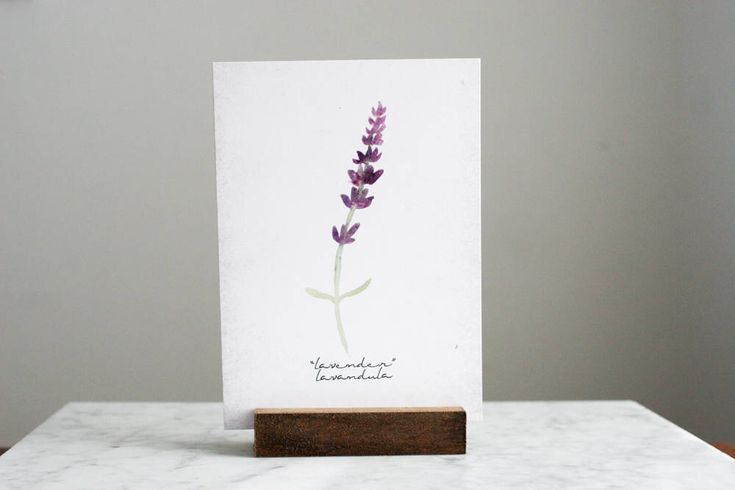 Lavender Art Print with Scientific Name, Botanical, Kitchen Art Decor, Botanical Herb Art, Printable - INSTANT DOWNLOAD - 5x7 Inches by CraftivityDesigns on Etsy https://www.etsy.com/ca/listing/483177361/lavender-art-print-with-scientific-name