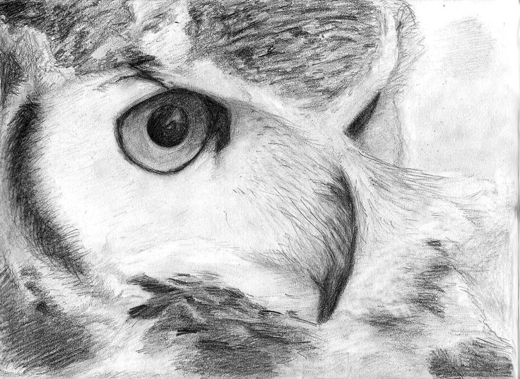 367 best owl sketches images on pinterest tattoo ideas for Cool drawings of owls