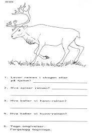 Bilderesultat for reinsdyr same lasso