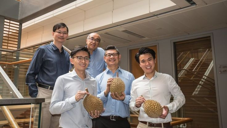 Singapore scientists reveal origins of durian's pungent aroma - One of nature's smelliest secrets may have been revealed thanks to a dedicated team of durian-loving scientists in Singapore. Researchers have found an odour gene which gives the thorny fruit its notoriously pungent scent.