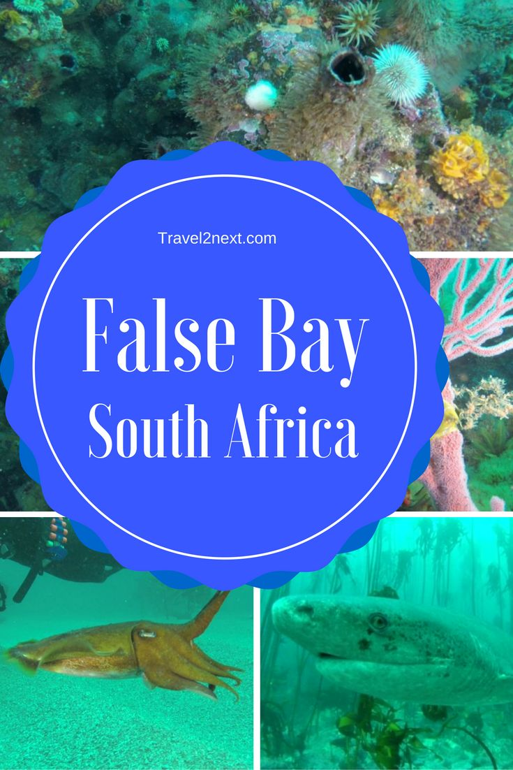 "False Bay, South Africa. I read an article about ""the bay of plenty"" in a South African Airways flight magazine en-route to join friends for a 2,000 km drive from Durban to Cape Town."