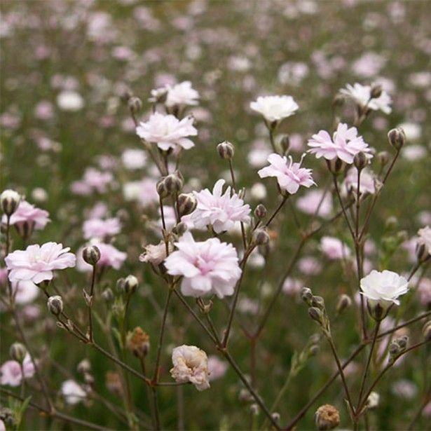 Les 170 meilleures images du tableau fleurs sur pinterest couvre sol fleurs et plantes - Petites fleurs roses vivaces ...