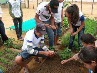 Escola na zona rural de Quixaba adota horta em projeto sustentável   S1 Noticias