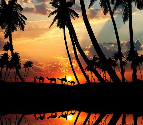 Pakistan Camels at Sunset ~ via Travel This World