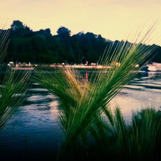 Reclam the beach. #Linz #Donaustrand #FängerimRoggen