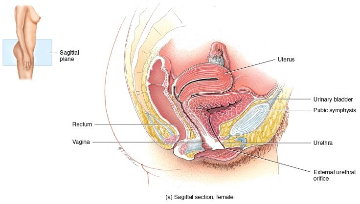 Vagina and rectum itch