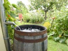 Regenwasser im Garten nutzen