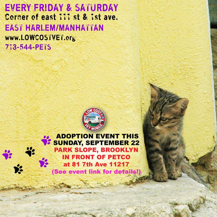⭐️⭐️⭐️ Adoption Event this Sunday Sept. 22, 12 PM 430 PM