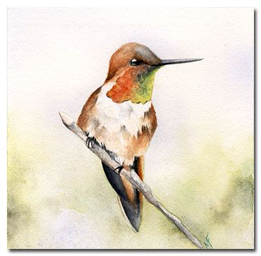 'Hummingbird'  Watercolor - From the Studio of Madelaine: June 2009