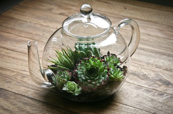 """Tea-rrarium"" from the T2 Blog. The perfect addition to any happy home, we have brought one of our glass tea pots to life with just a little potting mix and a few mini succulents. What you need: Glass teapot A small amount of potting mix A selection of small succulents & cactus (Particularly ones with tiny ones growing around the edges) This took a leisurely half hour with minimal mess. We highly recommend getting creative on this."