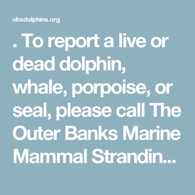 . To report a live or dead dolphin, whale, porpoise, or seal, please call The Outer Banks Marine Mammal Stranding Network at 252-455-9654 and provide the following information: