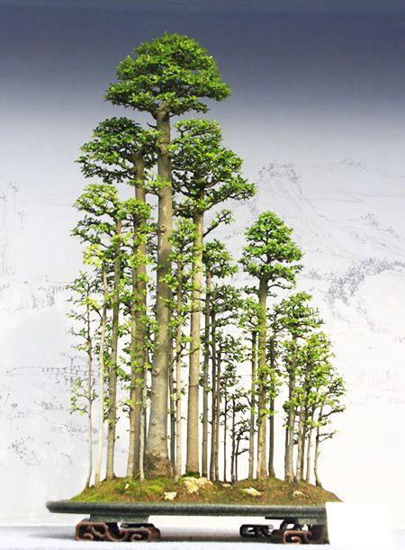 BONSAI - http://bonsaibark.com/wp-content/uploads/china.jpg