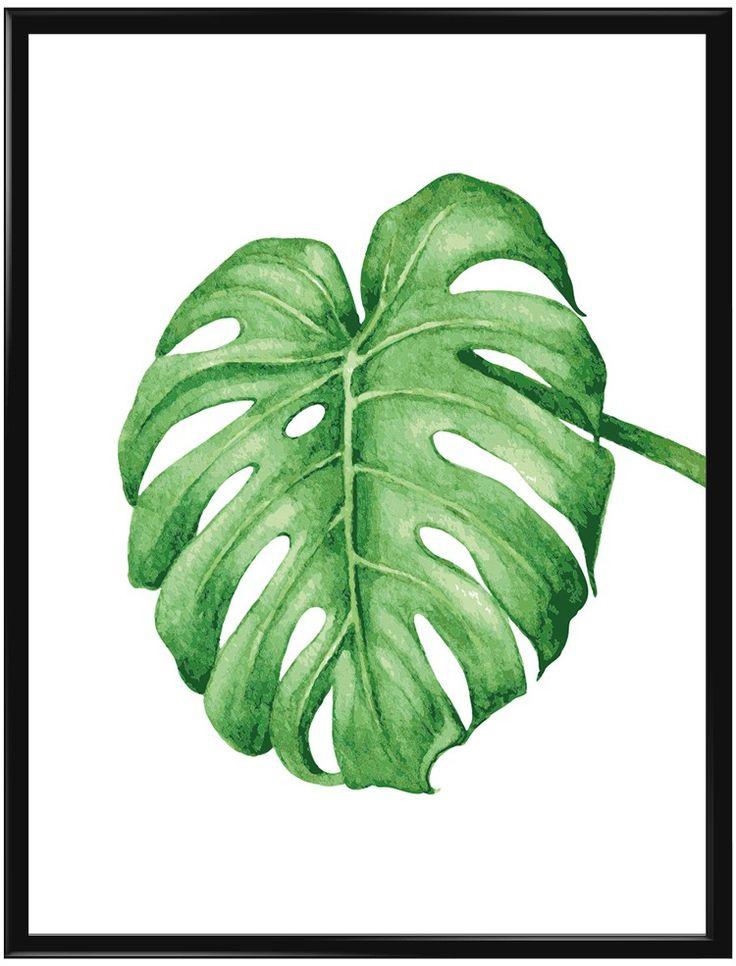 Monstera är en växt som också kallas för Adams revben. Inte så svårt att förstå…