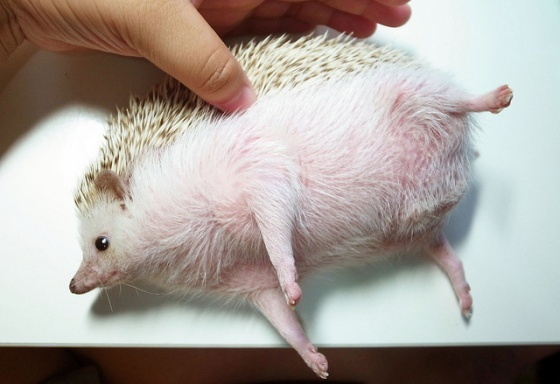I'm not fat, I'm bloated. This is just a temporary condition, right?