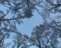 Puut talviasuissaan