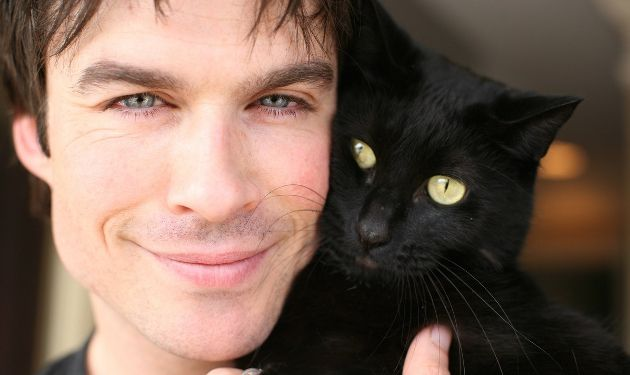 Celebrities Who Love Cats - Bing Images