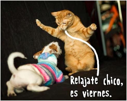 """""""Relájate chico, es #Viernes"""". #Citas #Frases @candidman"""