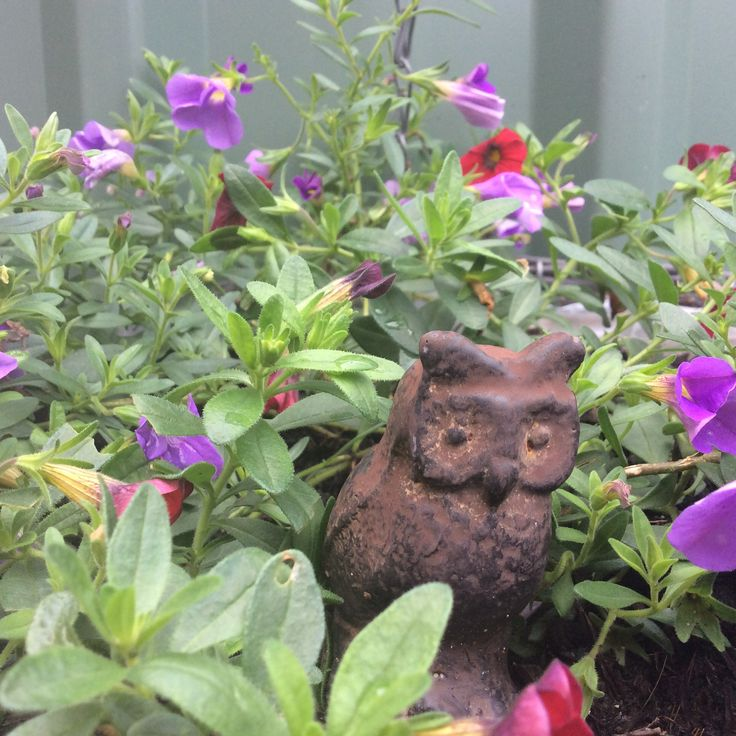 Iron owl in a hanging basket