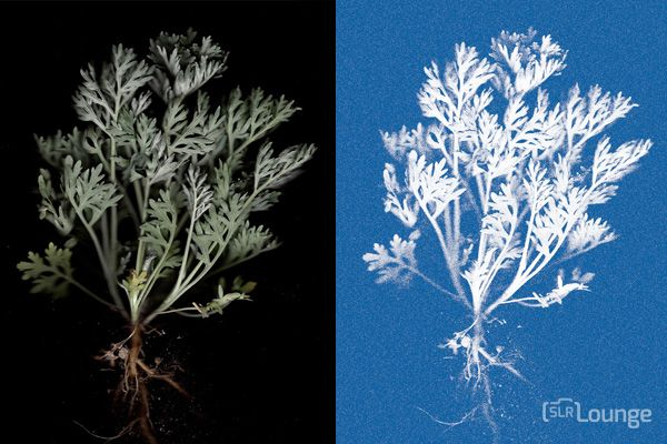 How to Make a Modern Photogram Using a Flatbed Scanner
