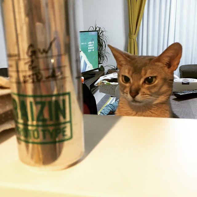 これは何や  #ネコ #猫 #ねこ #にゃん #にゃんこ #アビシニアン #アビ #ブルー #ねこ部 #ねこばか #cat #abyssinian #catsagram #catstagram #instagood #kitten #kitty #kittens #pet #pets #petstagram #photooftheday #ilovemycat #instagramcats #lovecats #lovekittens #catlover #instacat #followchizuroom05202016/03/13 17:45:08