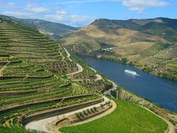 #Portugal, Douro vineyards (Porto Wine)  Via Great Wine Capitals Global Network