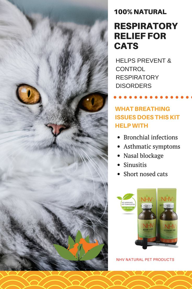 Natural Remedy For Respiratory Infection In Cats