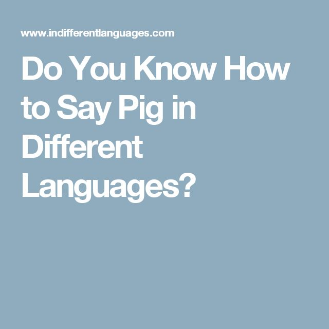 Do You Know How to Say Pig in Different Languages?