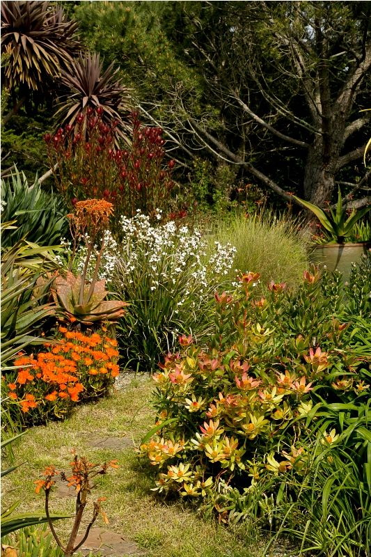 South African and companion plantings at Laguna Ranch. Designing with History and the Land by Janet Enright & Jeff Rosendale