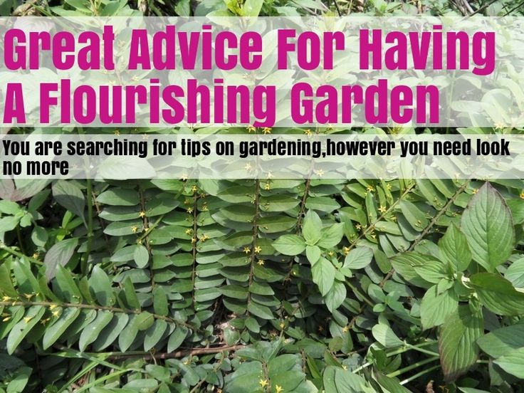 Top Tips To Take Your Organic Gardening To The Next Level!