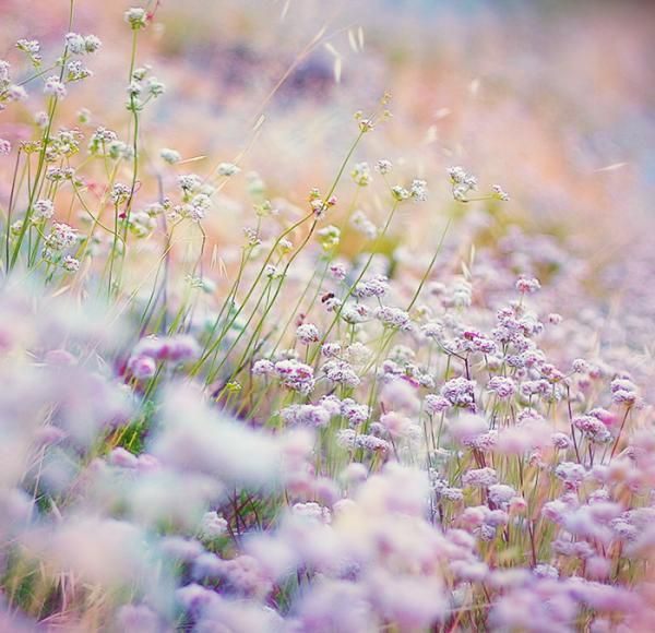 Ethereal beauty ...