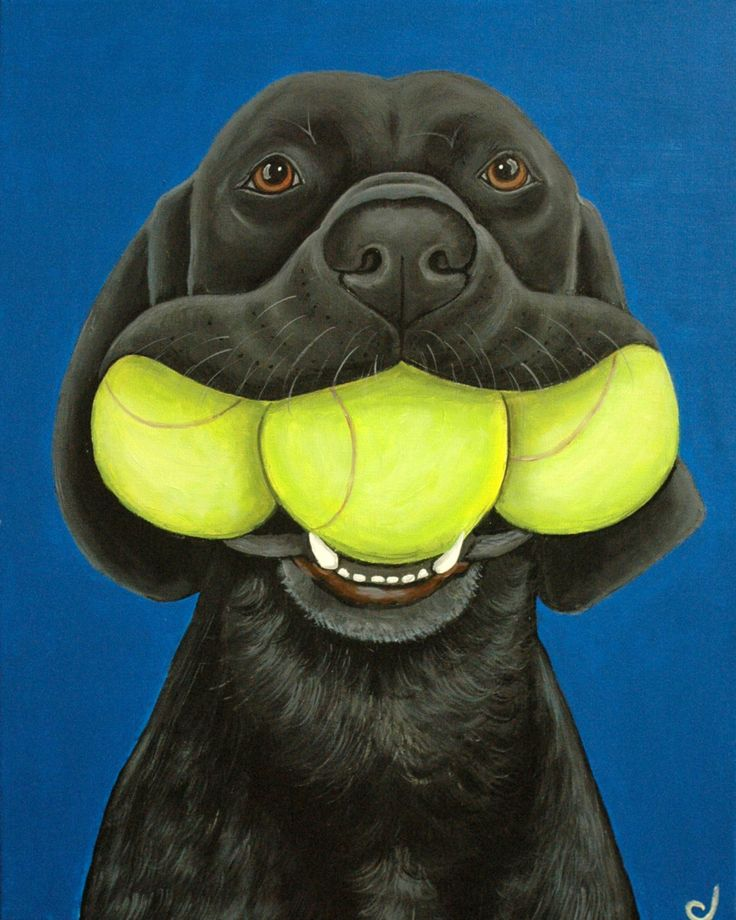 Black Labrador Dog and Tennis Balls Fine Art Print by carolscanvas