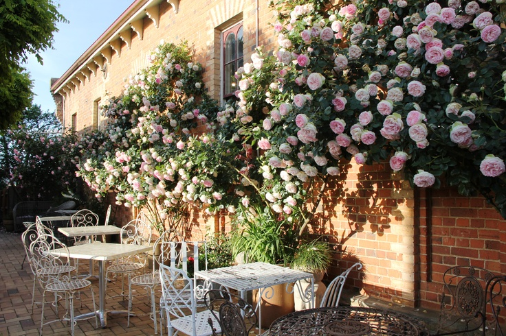 Courtyard,Ingleside Bakery,Evandale,Tasmania