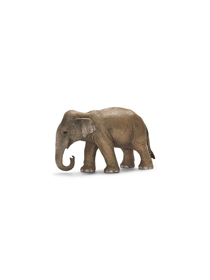 Азиатский слон, самка