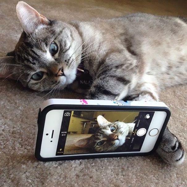 O Gato mais famoso do Instagram 'Nala' o perfil conta com mais de 3,2 milhões de seguidores.