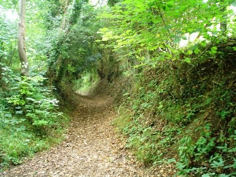 Google Image Result for http://www.chilternarchaeology.com/images/hollowway.JPG