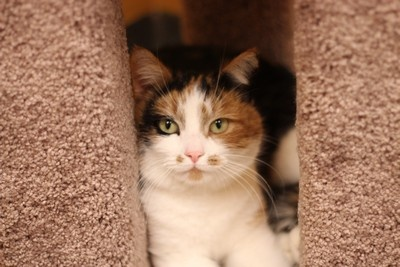Camelia loves to relax! Check her out at hatsweb.org!