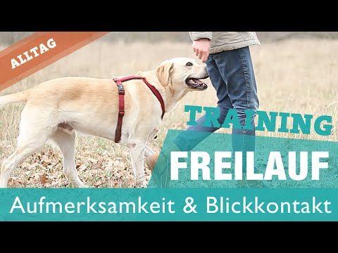 Tipps: Hund hört nicht, ignoriert mich draußen   Aufmerksamkeit Bindungsübung Hundetraining - YouTube