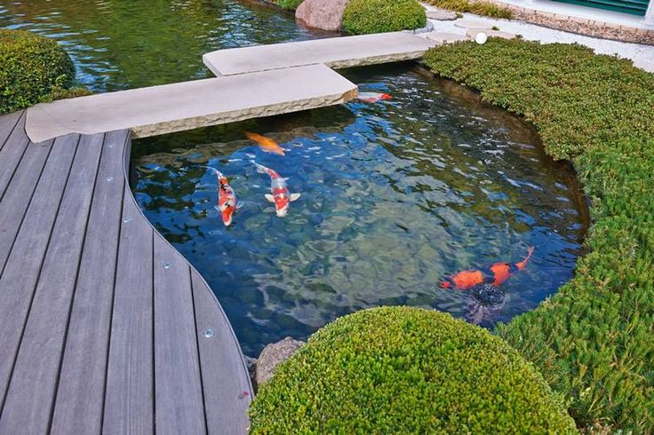 17 best images about ideen koiteiche on pinterest for Koi fish pond for beginners