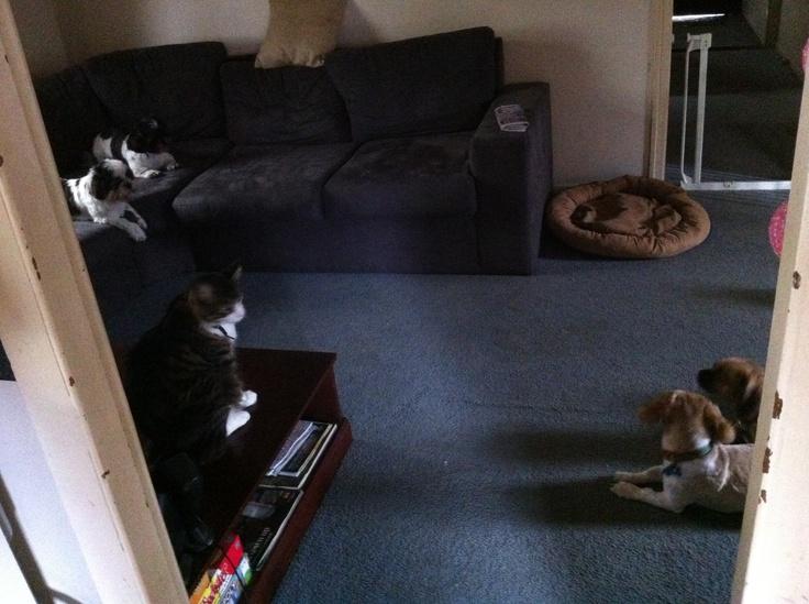 4 dogs, 1 cat, 1 week