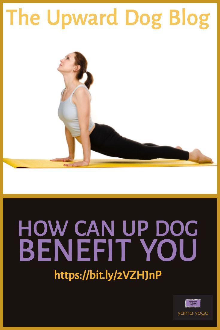 The Up Dog Blog Upward Dog Yoga Poses Upward Facing Dog
