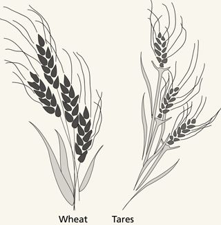 wheat and tares | Primary | Doctrine, covenants, Lds ...