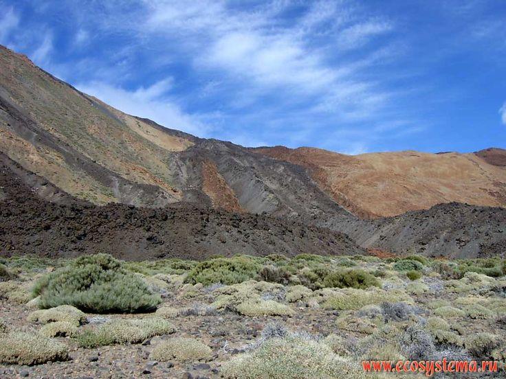 The volcanic lava flows on the Teide volcano slope. Xerophytic vegetation with Balsamiferous Spurge