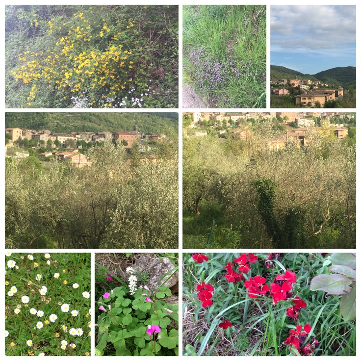 Collepardo #natura #fiori