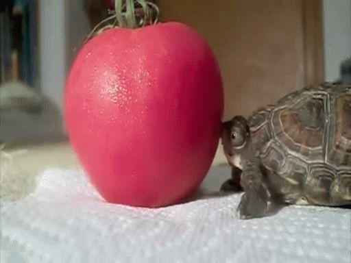 Oder groß.   24 Bilder, nach denen Du sofort eine Schildkröte adoptieren willst