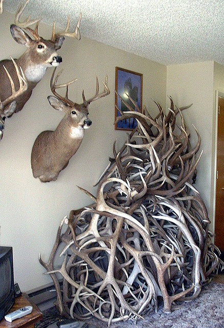 Antlers!~~My guy has 63 racks lining the top of his main room at the 'camp'...~