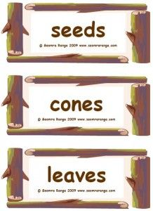 Labels for items on the classroom Nature Table